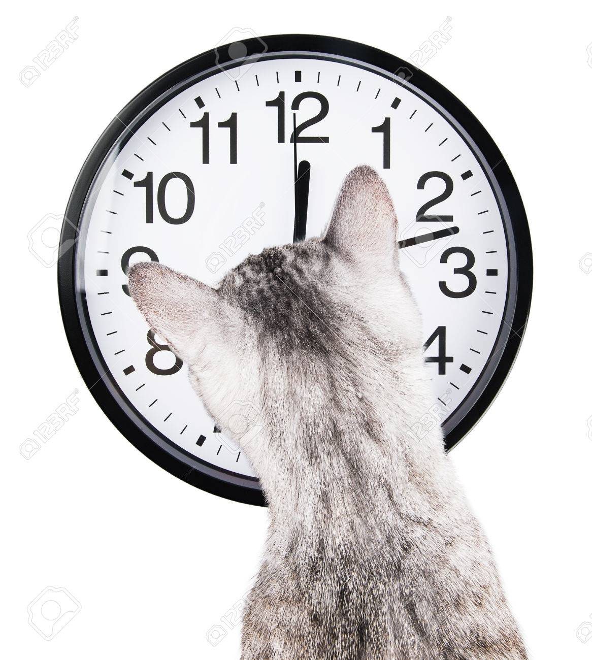 clock cat Isolated on white background Standard-Bild - 30282968