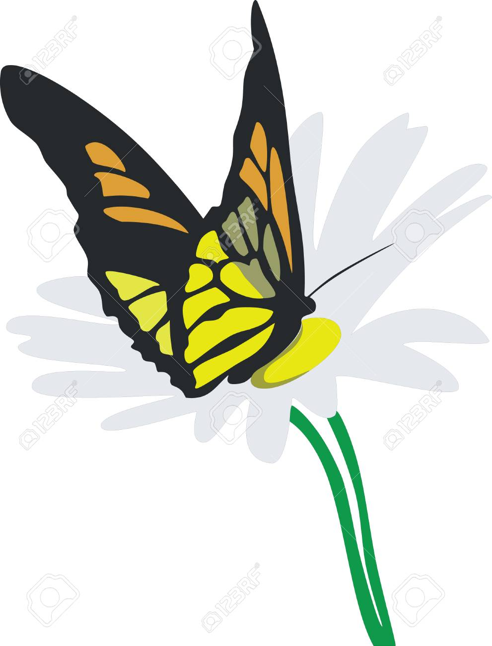 butterfly on flower color 02 Stock Vector - 5067922
