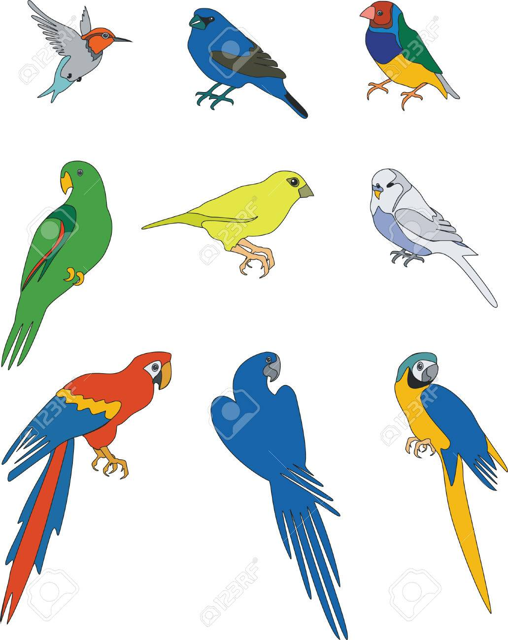 911 Finch Stock Illustrations Cliparts And Royalty Free Vectors