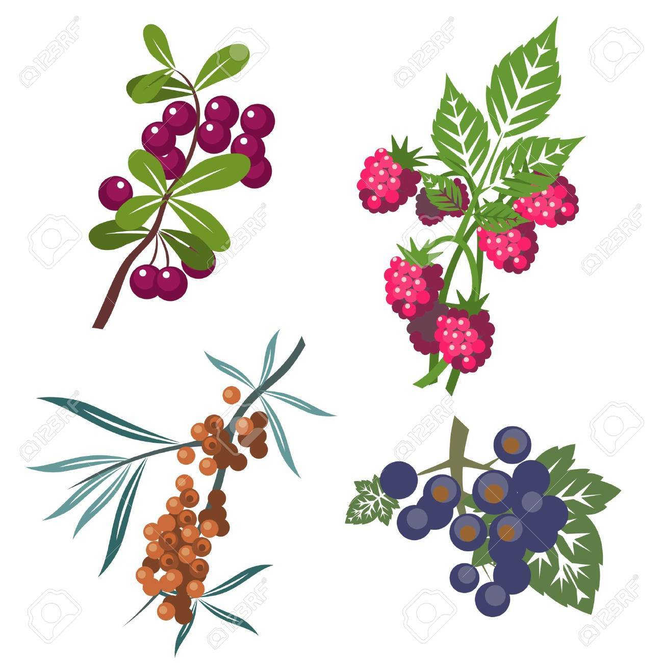 Berrys set in color Stock Vector - 8221935