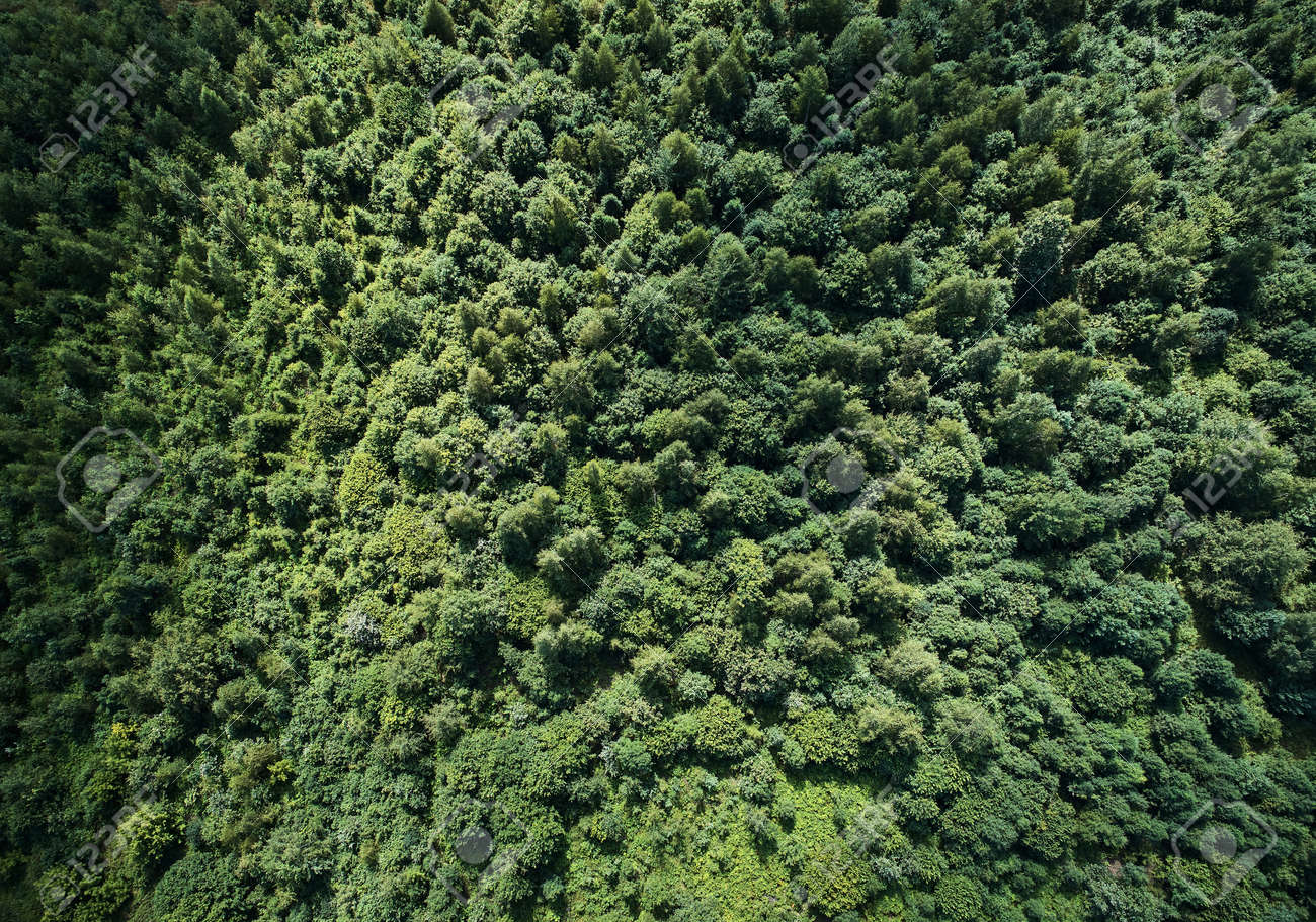 Green forest texture background aerial above top view - 153448008