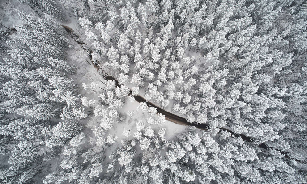 Winter path in forest above top drone view. Cold weather theme - 171366984