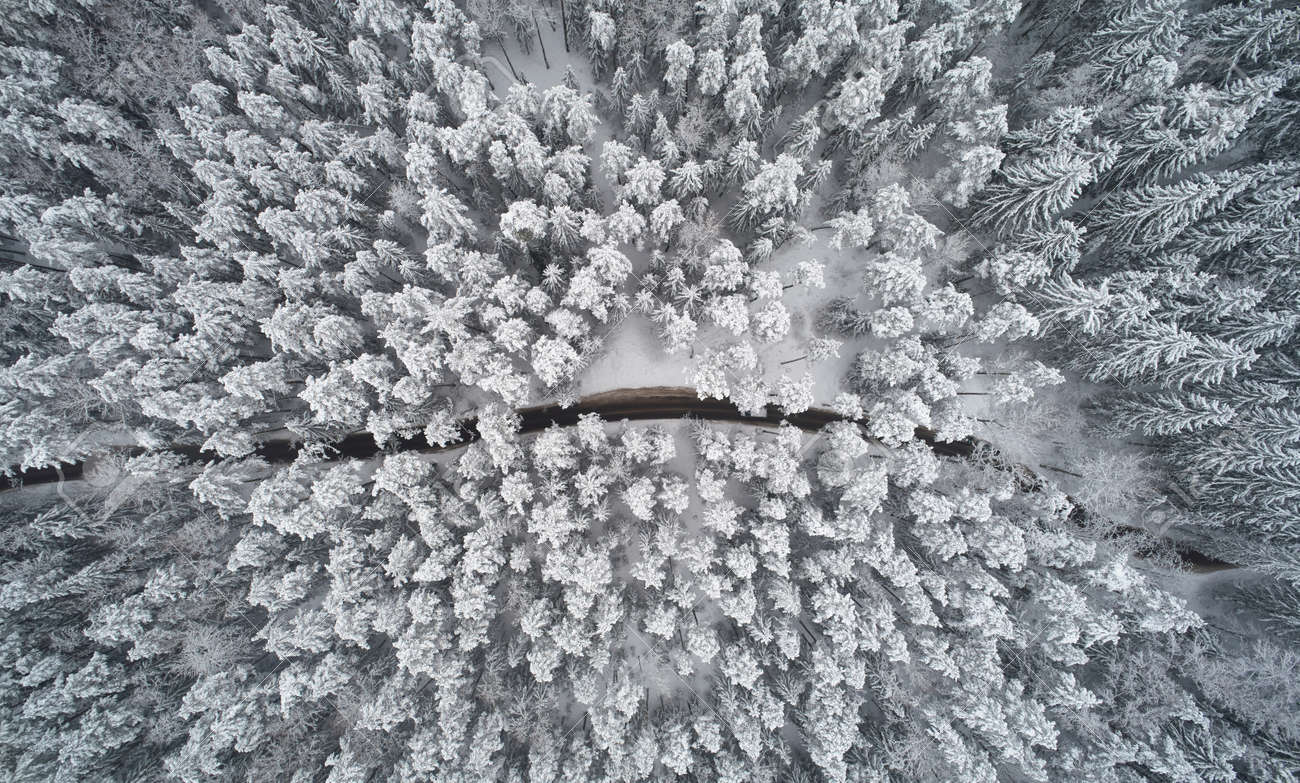 Rural road in winter forest background above top view - 172044753