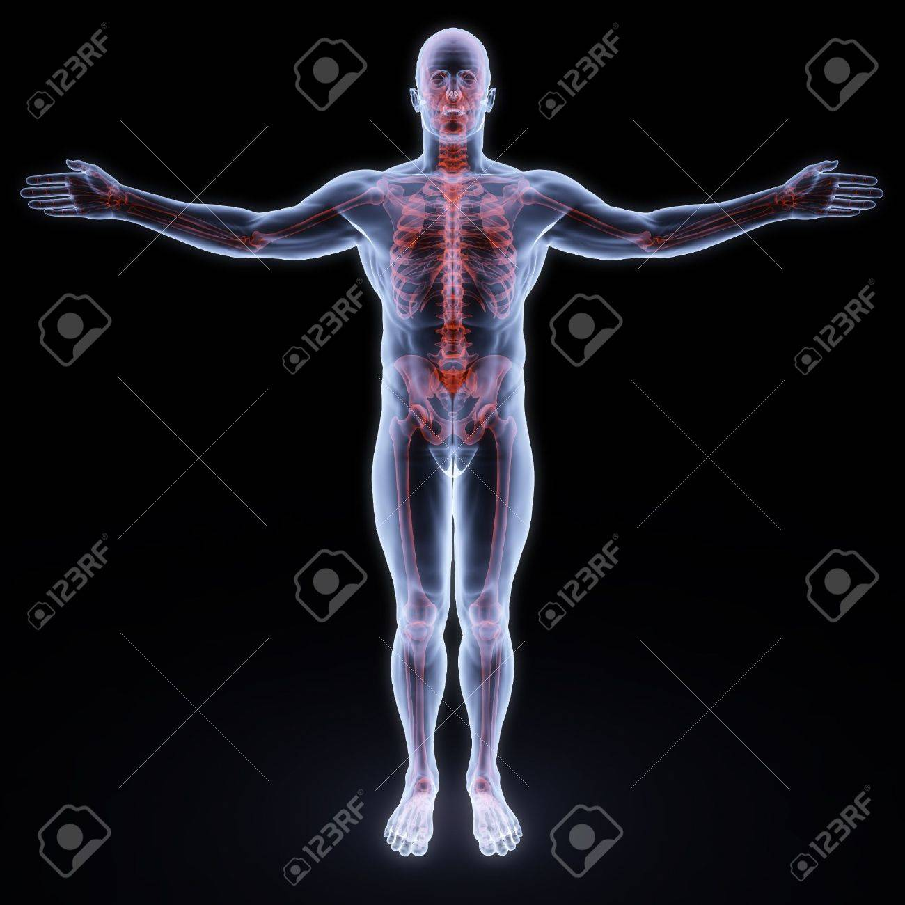 human x-ray with red sceleton Stock Photo - 6666743