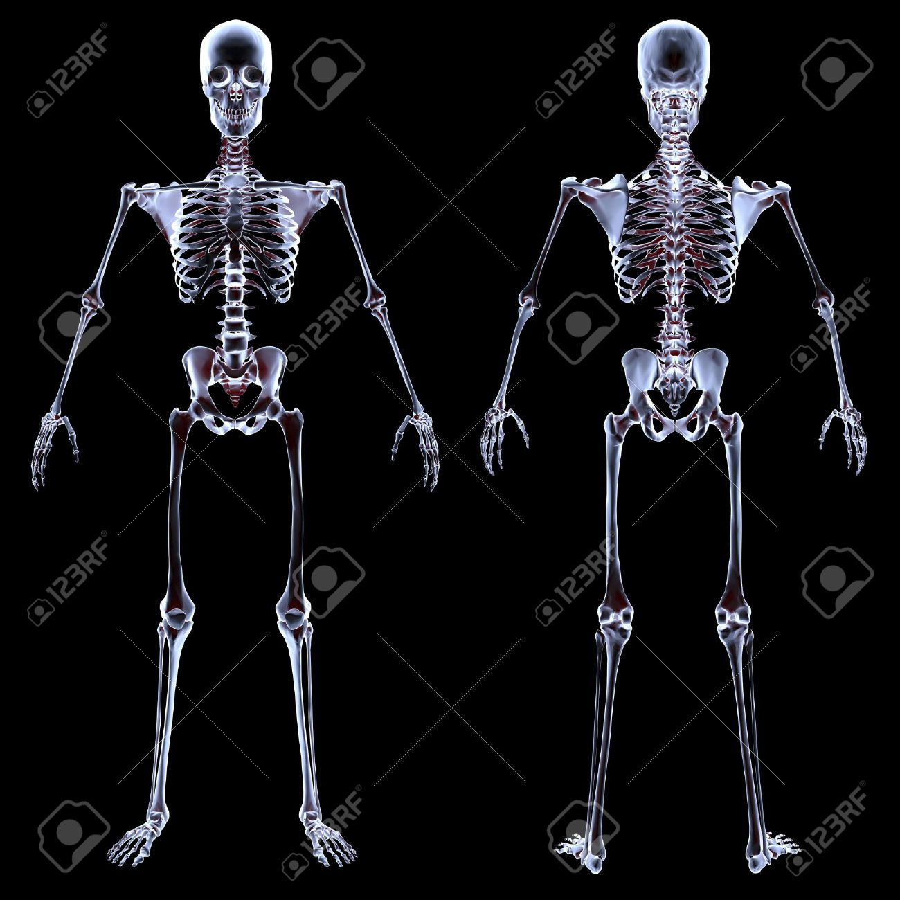 human skeleton under the x-rays. isolated on black. stock photo, Skeleton
