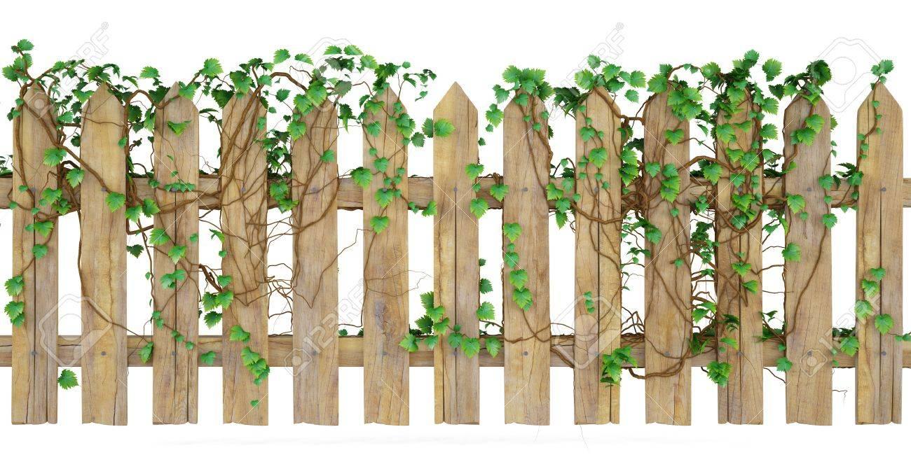 Holzzaun Mit Efeu Bewachsen Isoliert Auf Weiß Lizenzfreie Fotos
