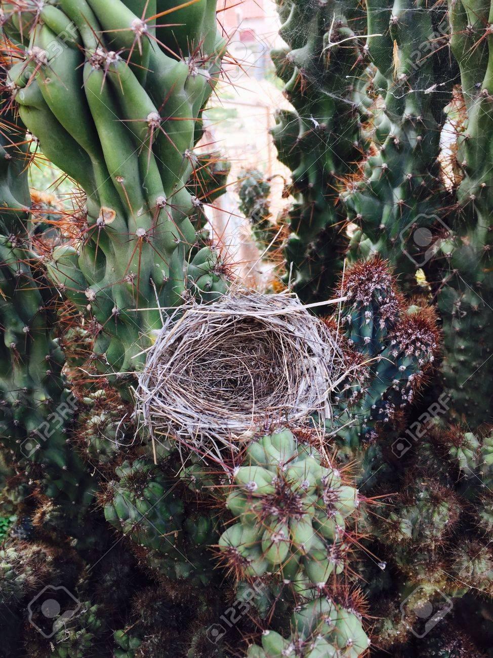 Un Nido De Pájaro En Una Flor De Cactus Fotos, Retratos, Imágenes Y ...