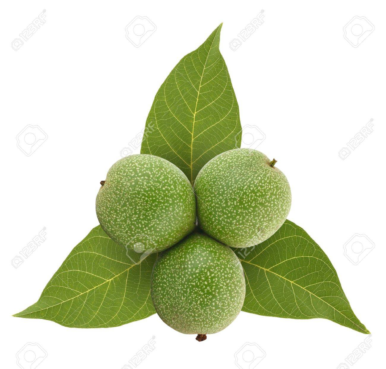 Green walnuts on leafs background, isolated on white Stock Photo - 9835597