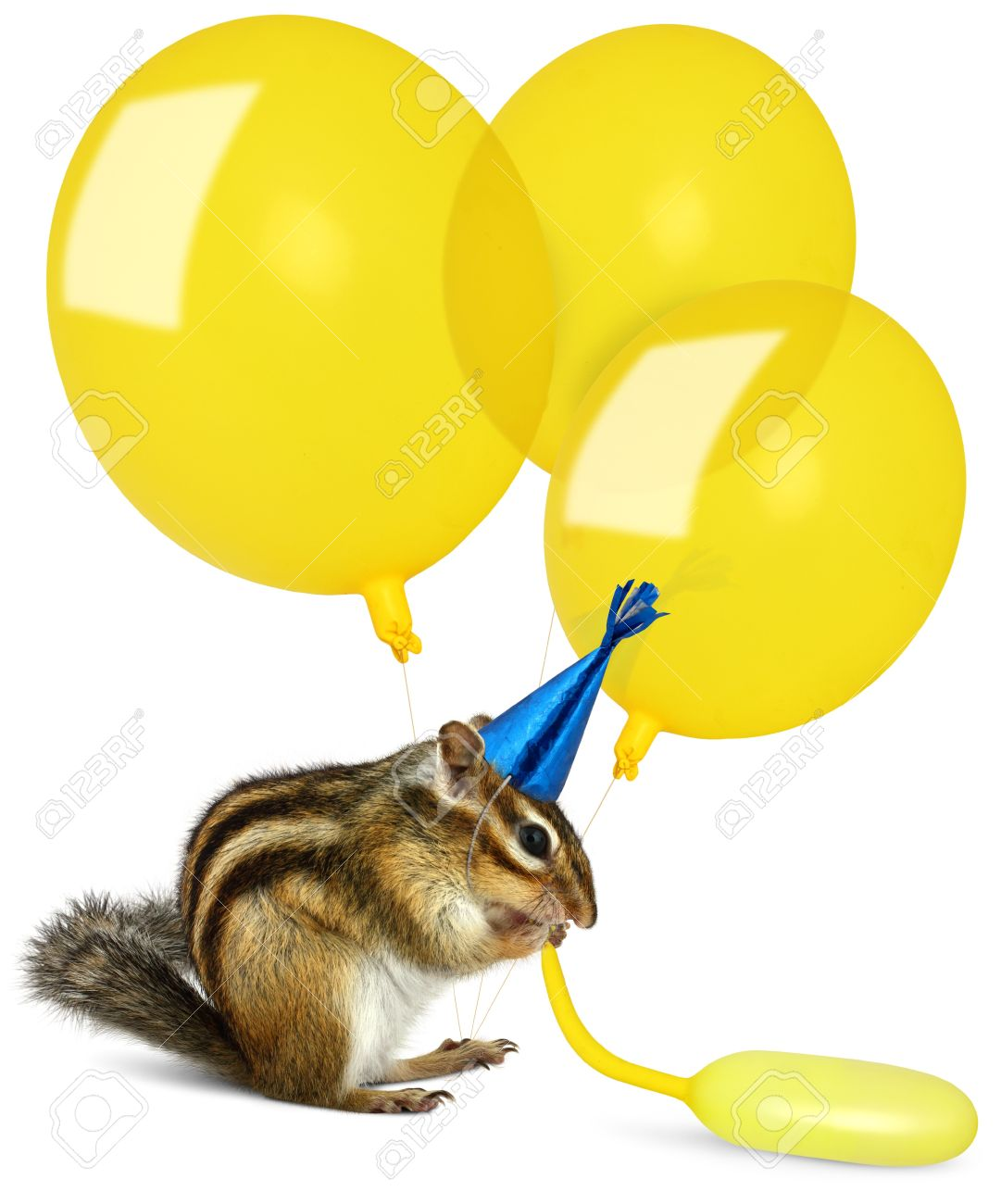 http://previews.123rf.com/images/dimjul/dimjul1207/dimjul120700017/14646535-Funny-chipmunk-inflating-yellow-balloons-wearing-birthday-hat-Stock-Photo.jpg