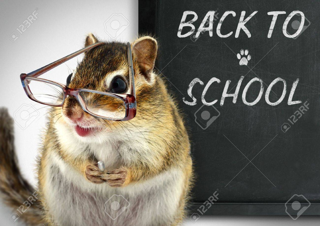 Funny chipmunk in glasses, back to school concept Stock Photo - 14837010
