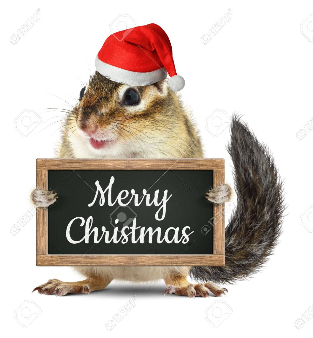 Christmas Squirrel.Funny Santa Claus Squirrel Hold Blackboard With Merry Christmas