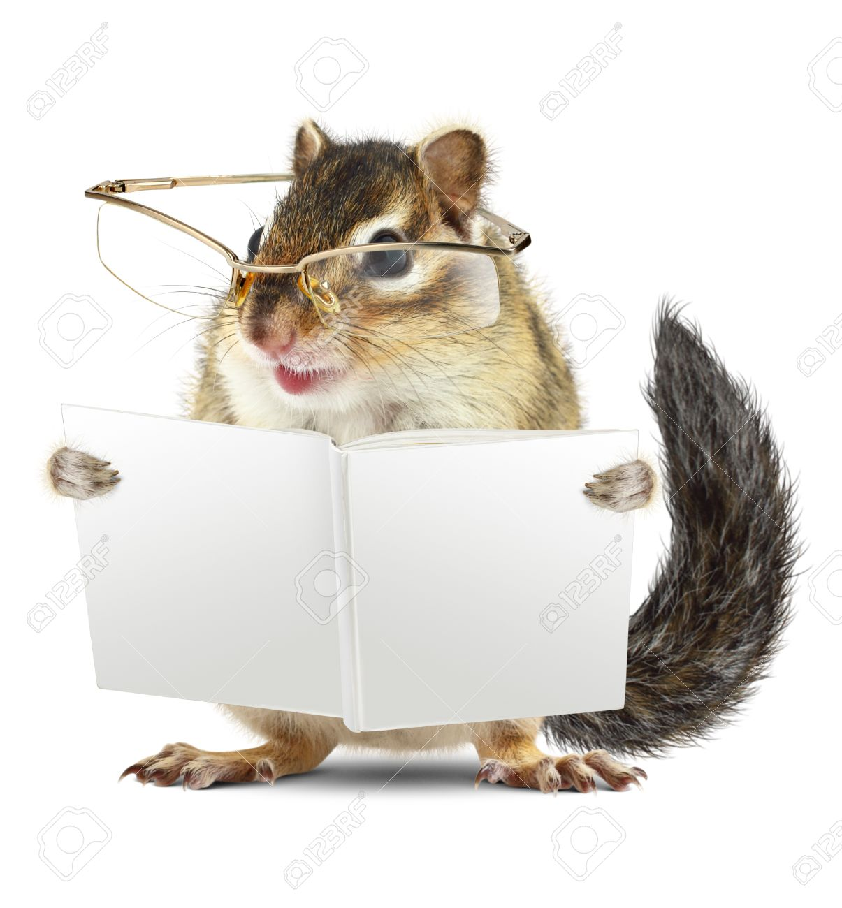 Funny animal chipmunk with glasses reading book jn white background - 47423434