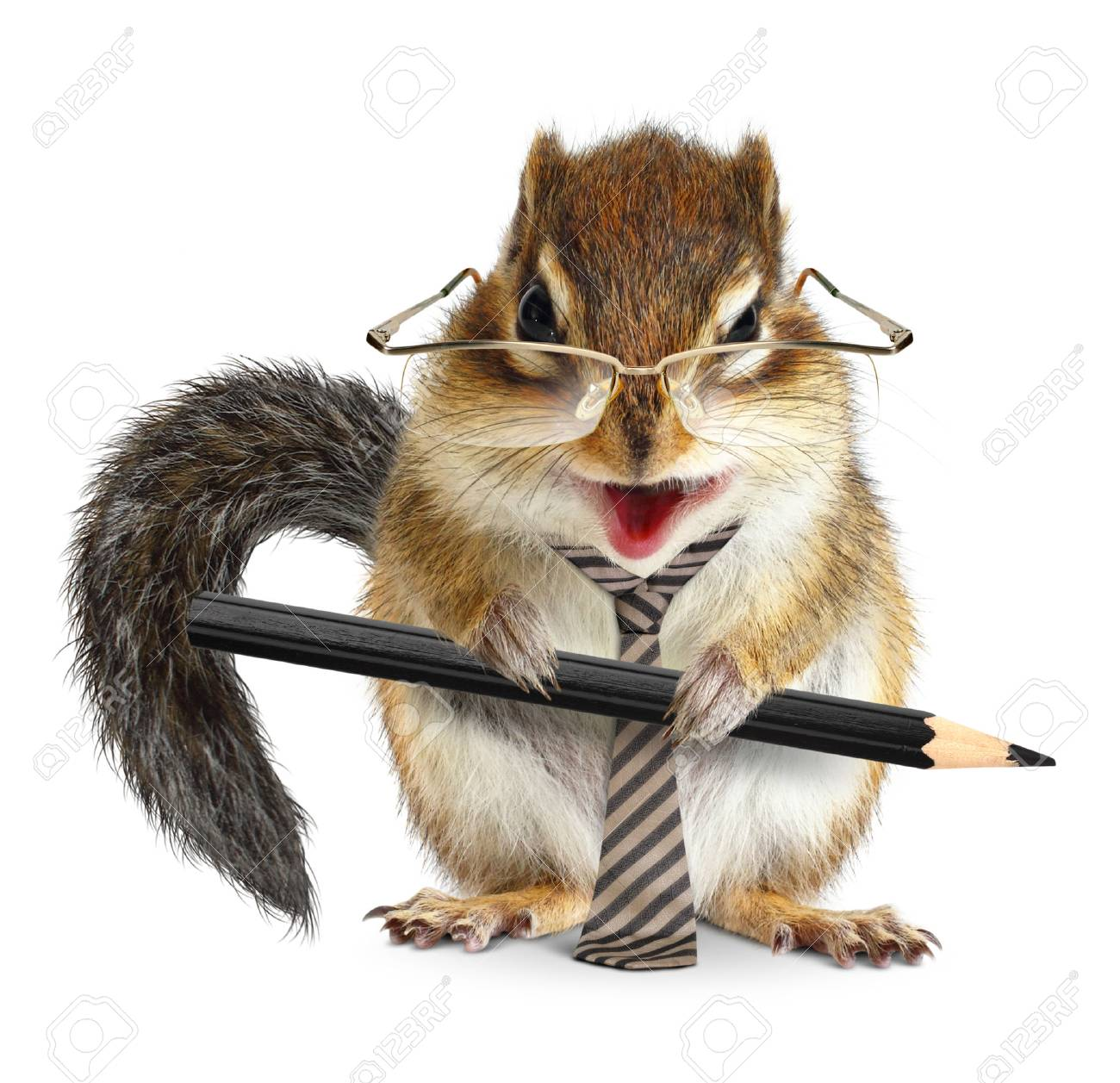 animal businessman, chipmunk with tie and pencil - 72497067