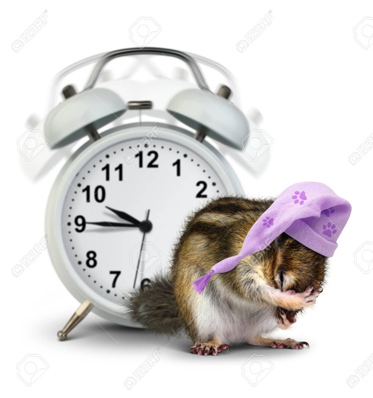 Concept De Bonjour Chipmunk Animal Drôle Avec Horloge De Sonnerie Et Chapeau De Couchage