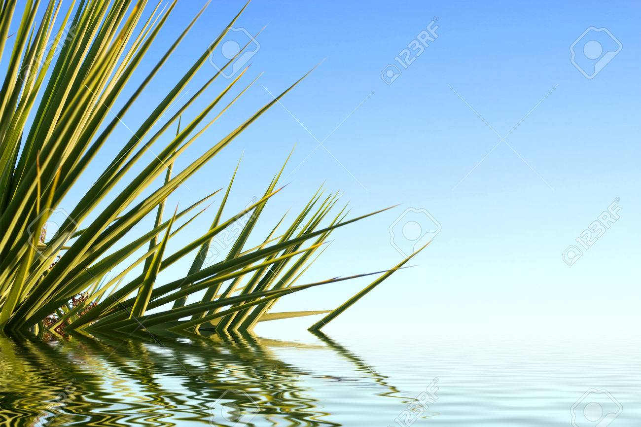 Palm leaves reflected in water and beautiful blue sky. Stock Photo - 1397935