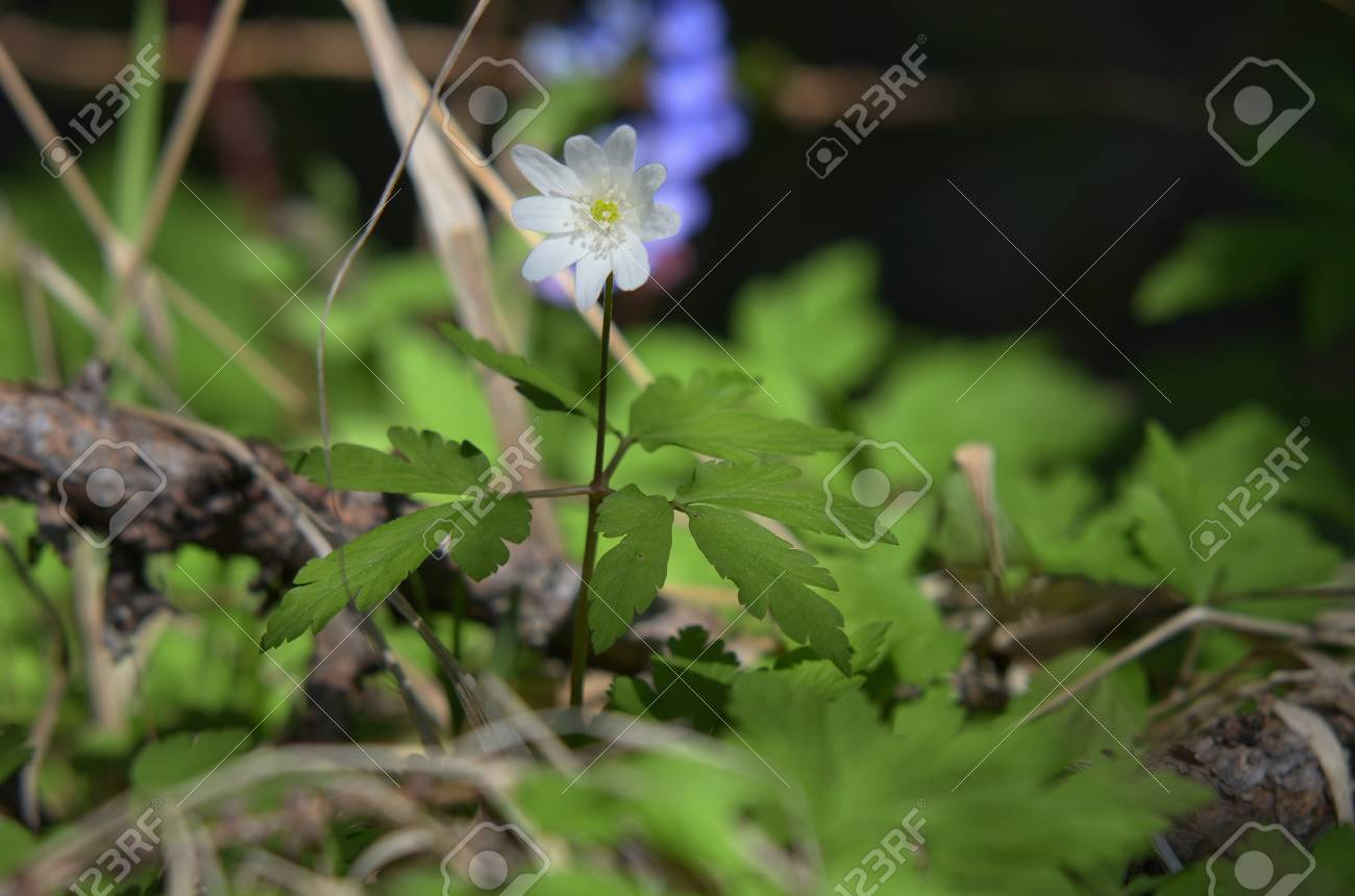 Free And Gentle Flower Growing Wild The Most Beautiful Flower 2017