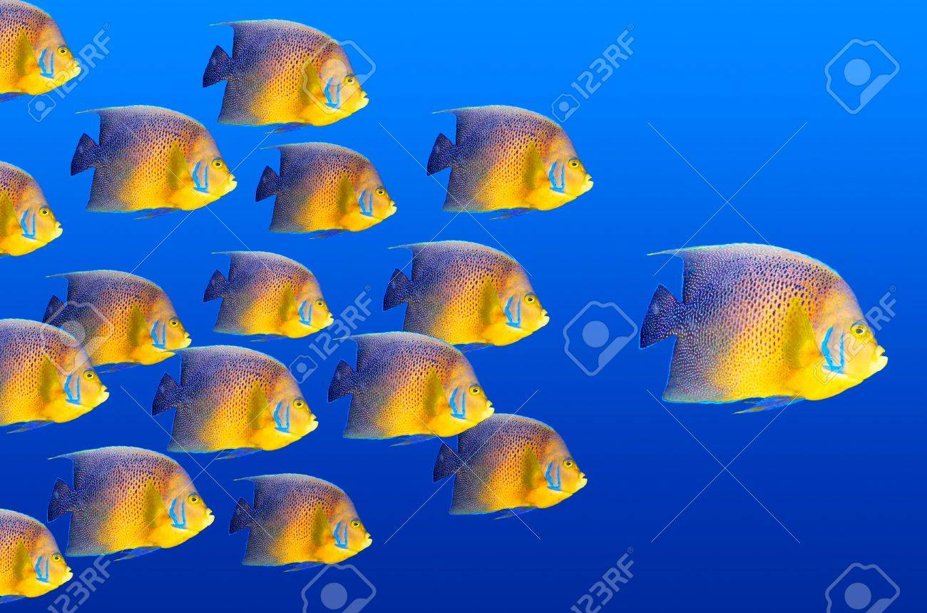 Big fish leading others Stock Photo - 7938017