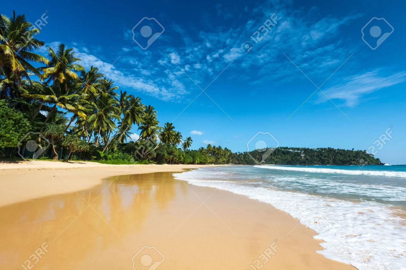 Idyllic beach. Sri Lanka - 35115727