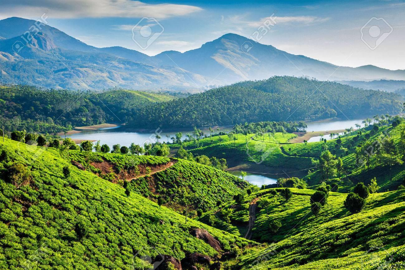 Tea plantations and Muthirappuzhayar River in hills near Munnar, Kerala, India - 53414818