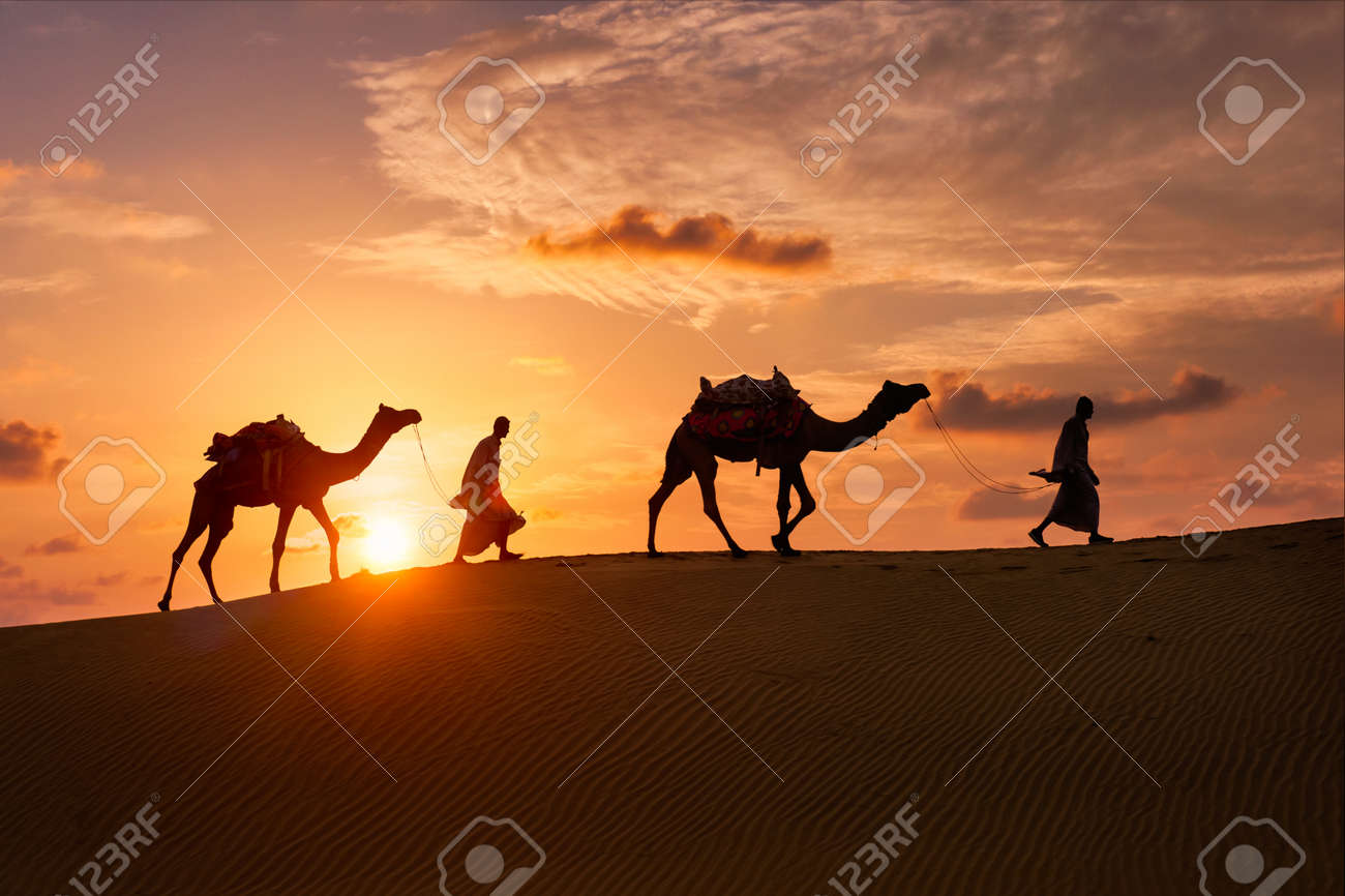 Indian cameleers camel driver with camel silhouettes in dunes on sunset. Jaisalmer, Rajasthan, India - 152063784