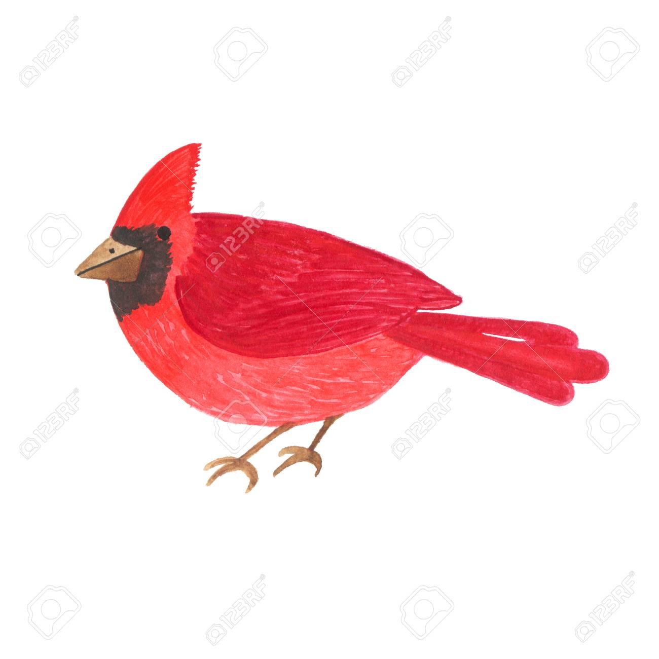 Hand Getekend Aquarel Schattig Rode Vogel Geisoleerd Op Een Witte