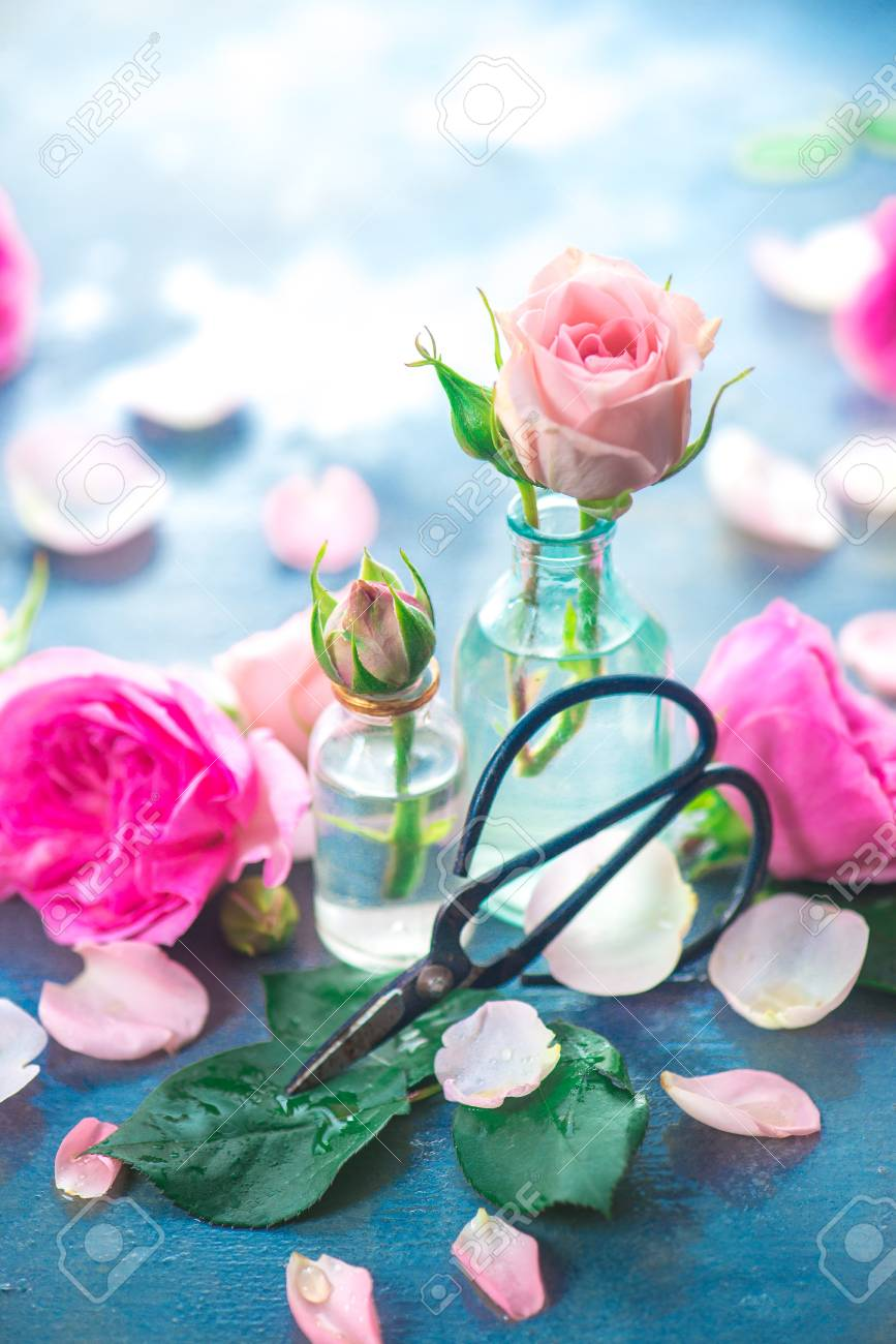 Pink roses in tiny glass bottles with Chinese gardening scissors on a neutral gray background with copy space. Spring gardening concept - 114729992