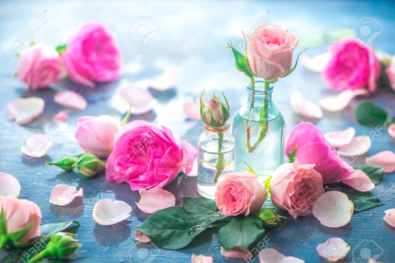 Pink peony roses, petals, and leaves on a wet rainy background in the morning light. Spring header with copy space - 114730020