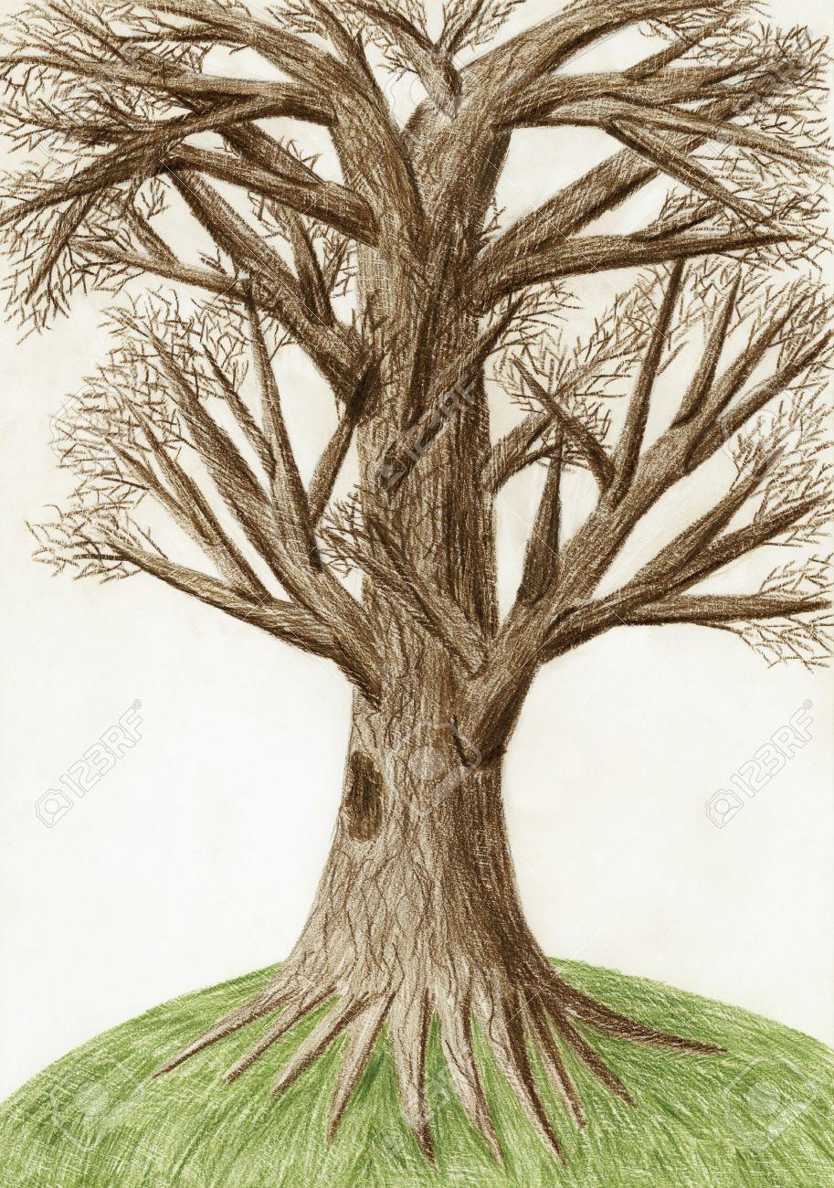 Lápiz De Color Dibujo Artístico El árbol Fotos Retratos Imágenes Y