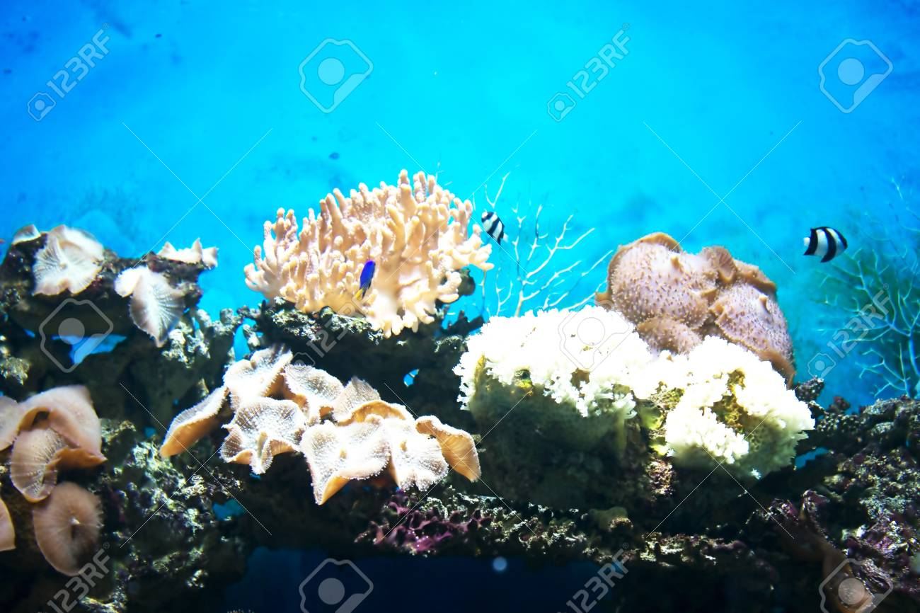 picture of the seabed Stock Photo - 18573004