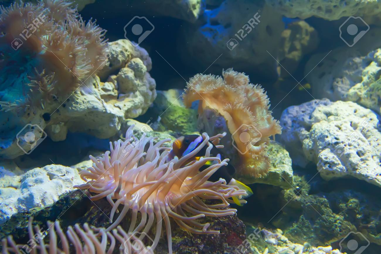 coral and ocean Stock Photo - 18854717