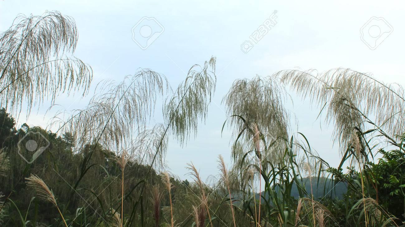grass and sky - 42092396