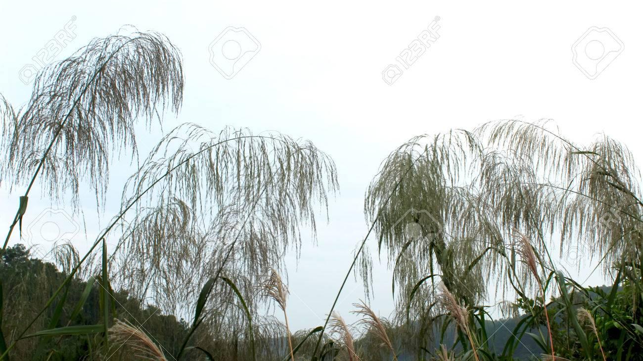 grass - 42092402
