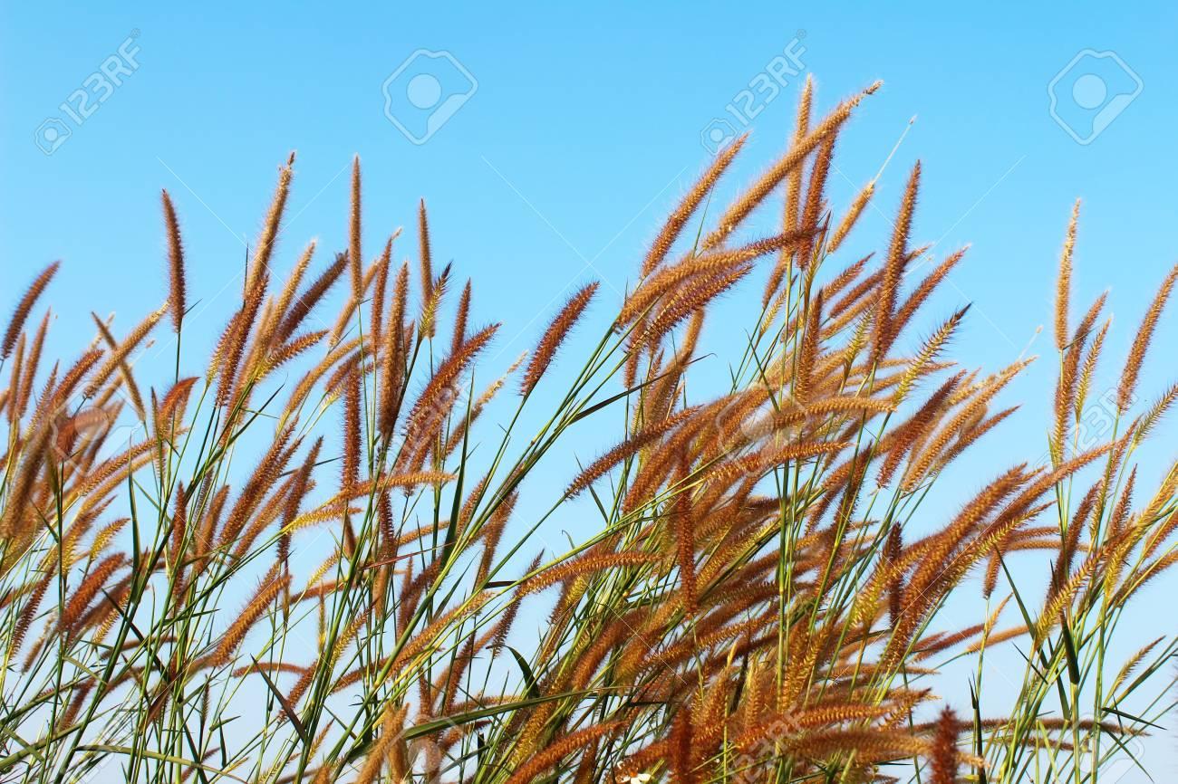 grass and sky - 41664812