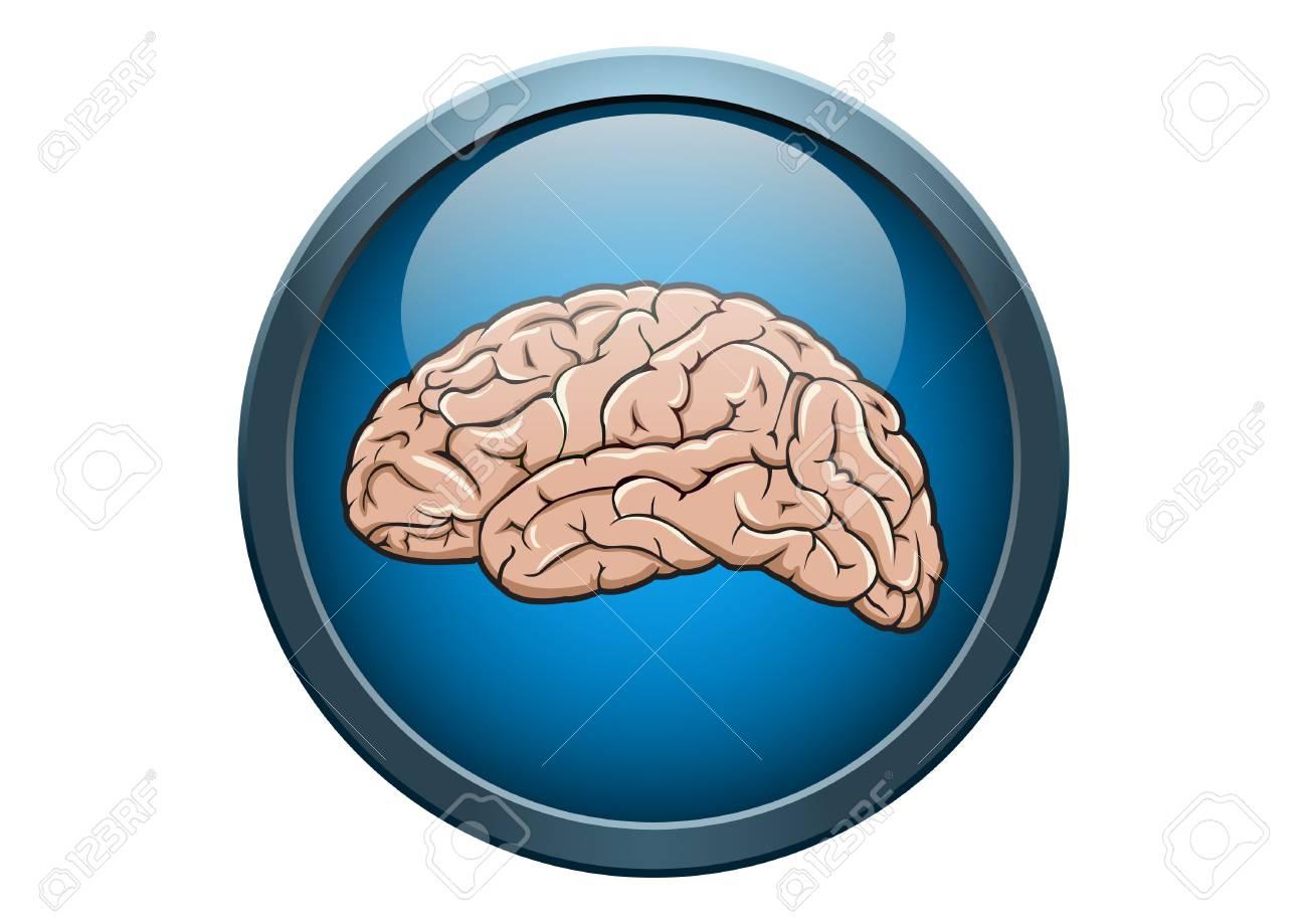Anatomía Del Cerebro Humano Ilustración Concepto Médico De Botón ...