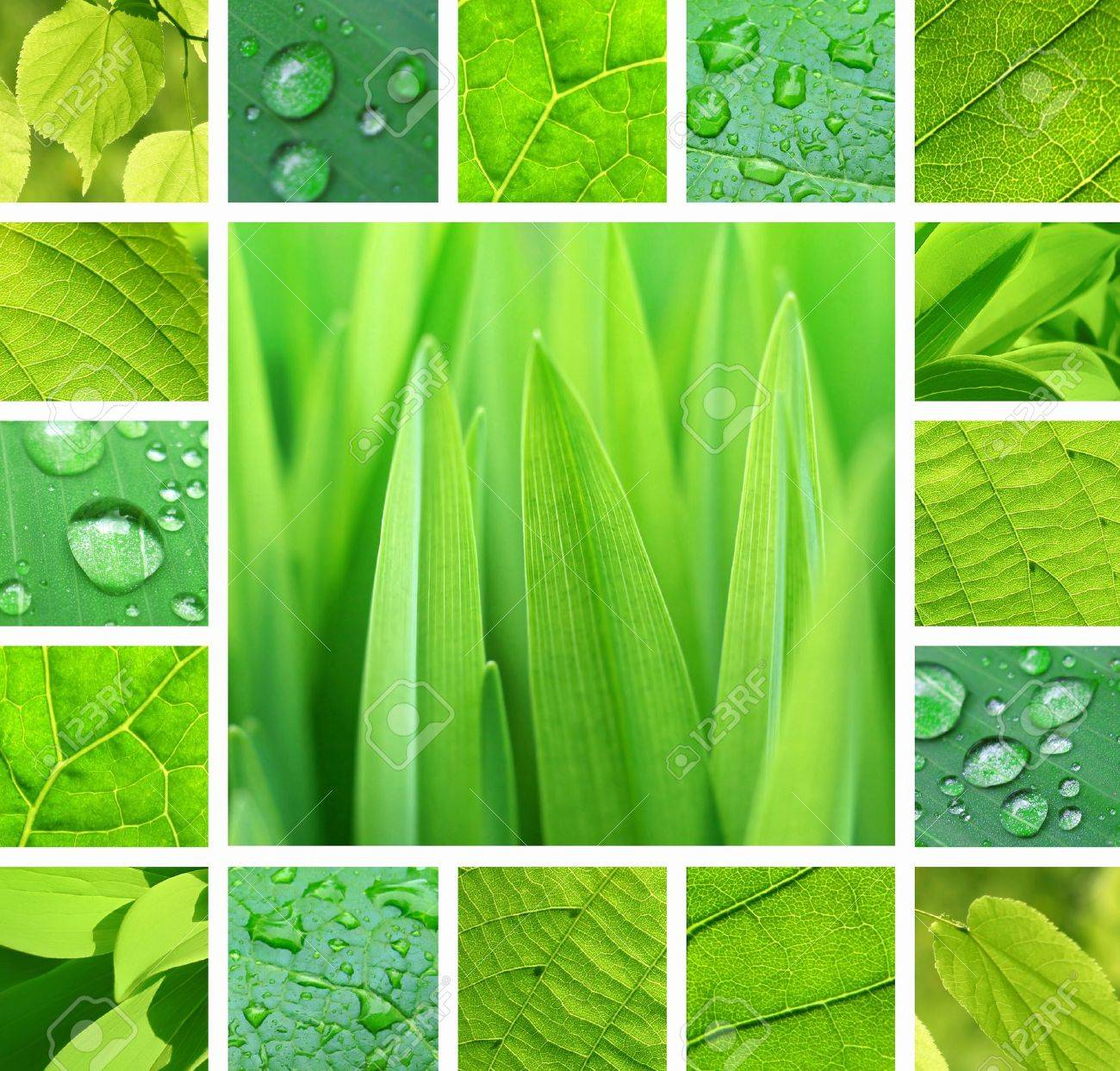Collage of green plant and leaves with rain droplets - 14935046