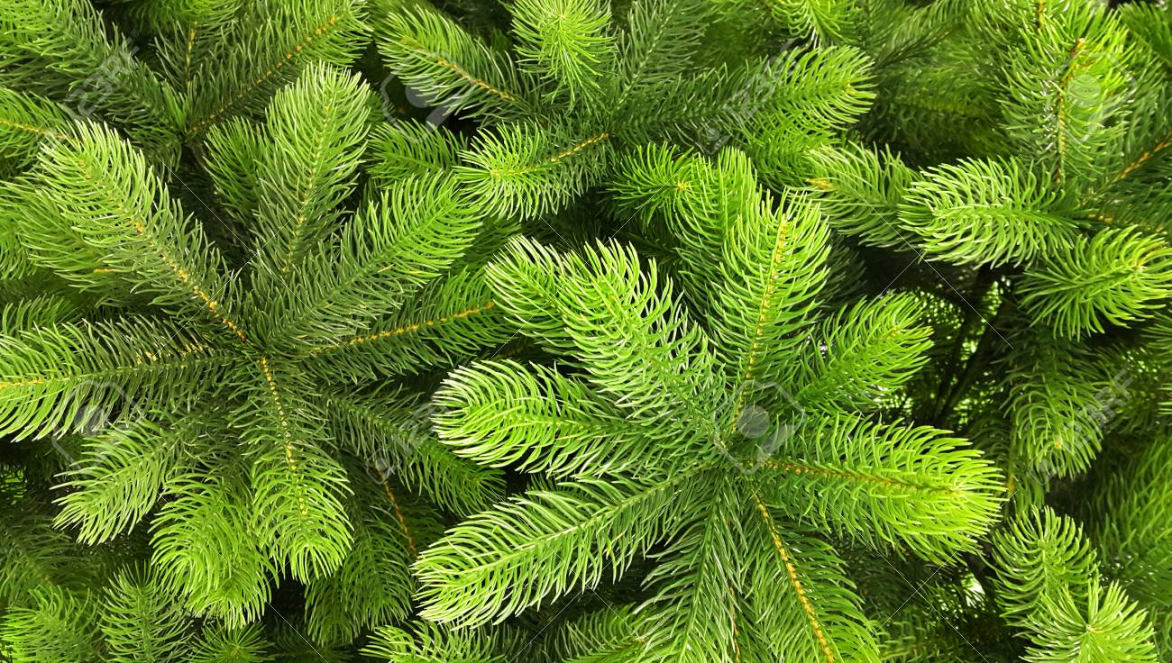 Artificial Christmas Tree Branches.Bright Green Branches Of An Artificial Christmas Tree Close Up