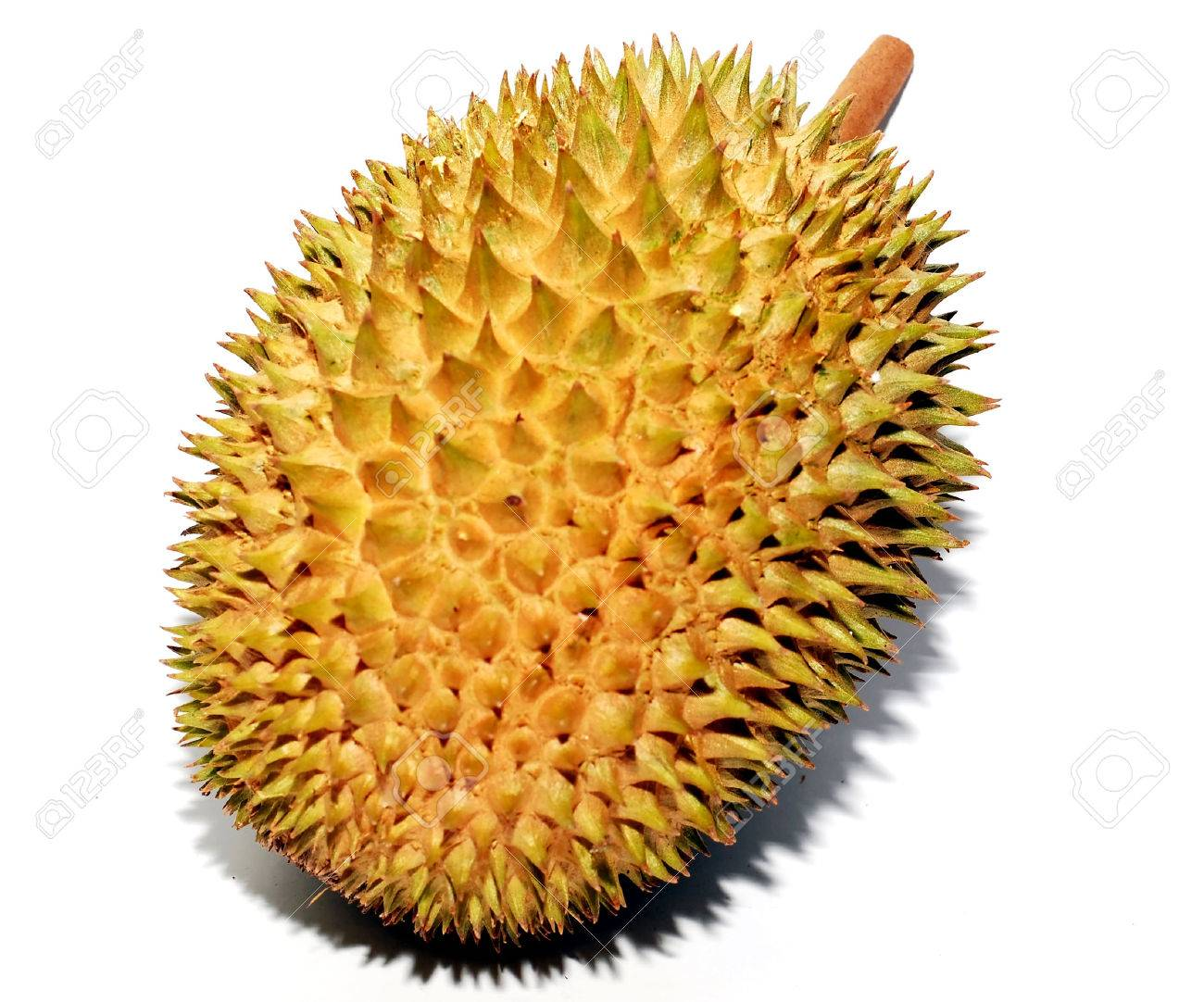 My Durian Stock Photos Images, Royalty Free My Durian Images ...