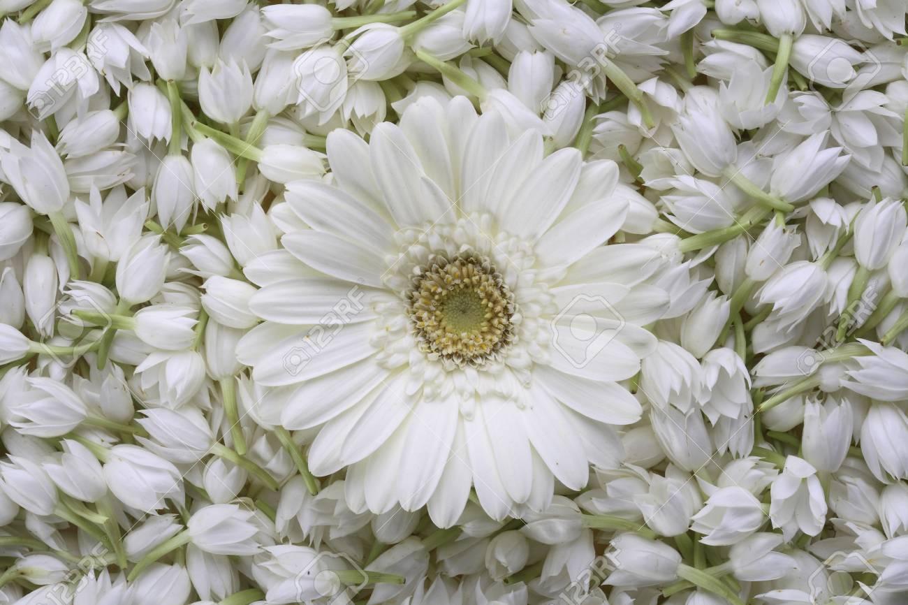 Jasmine Sambak Flowers Mogra With Gerbera Stock Photo Picture And