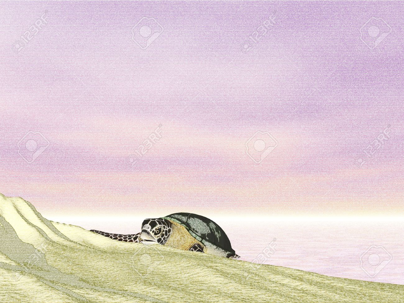 Pencil sketch turtle at sunset beach stock photo 436568