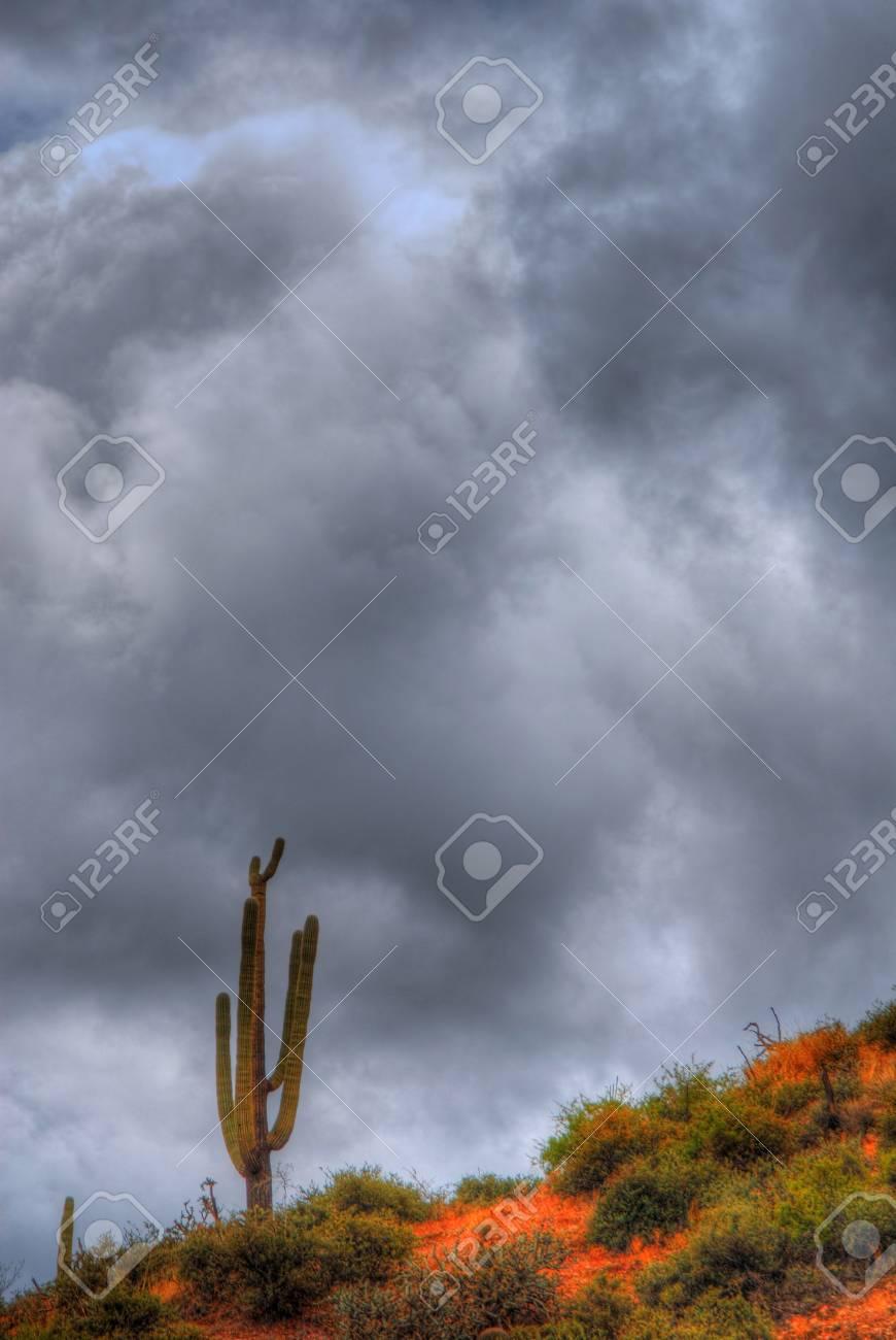 A dark storm forming over a Saguaro cactus Stock Photo - 11332095