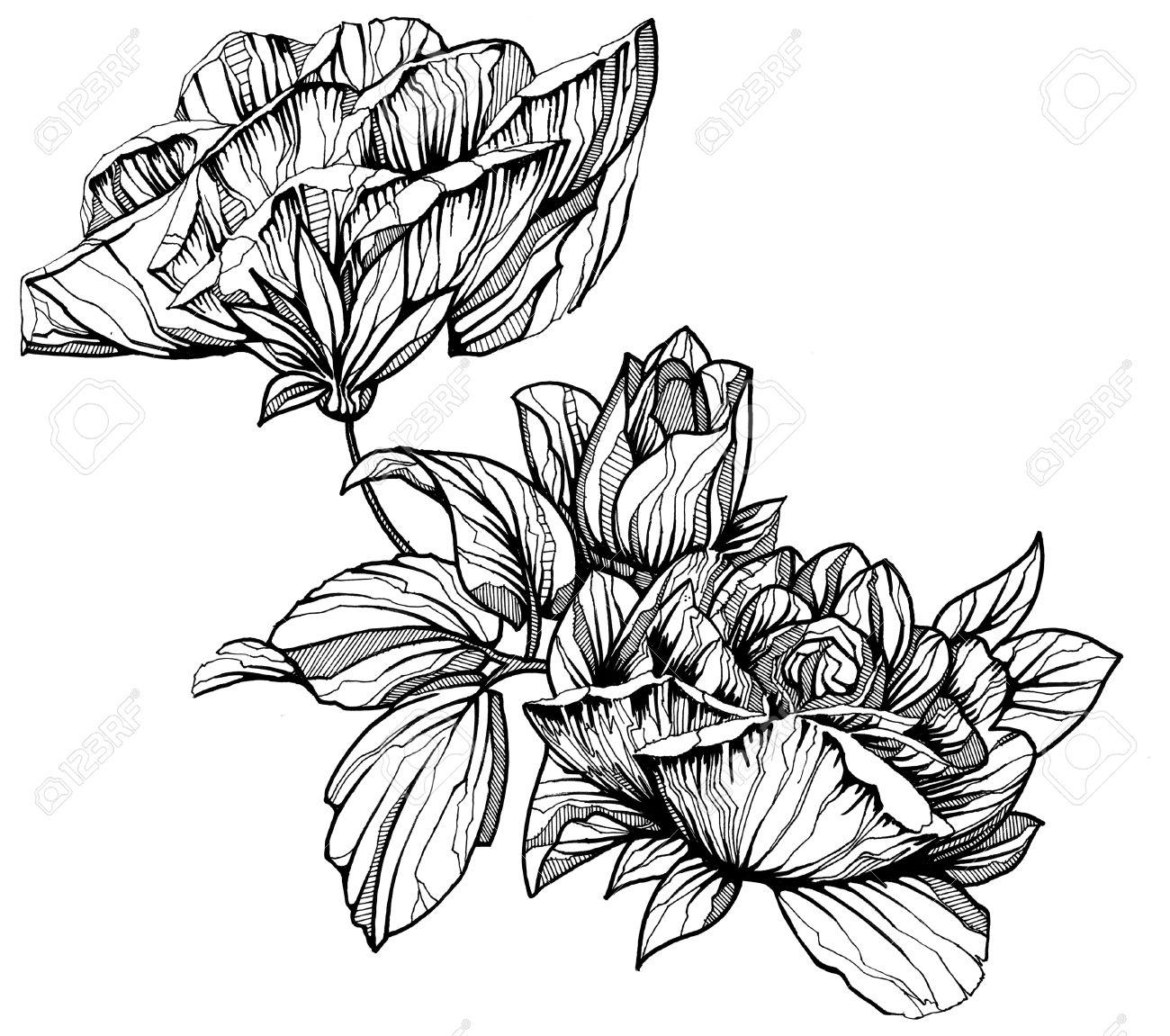 Banque d\u0027images , fleur graphique noir et blanc isolé