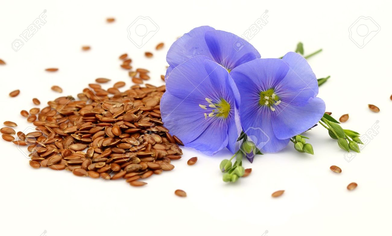 Seeds And Flowers Of Flax Stock Photo   9656294