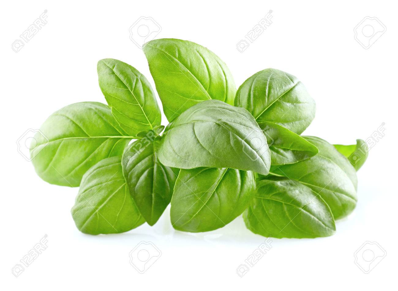 Basil leaves on a white background - 60384103
