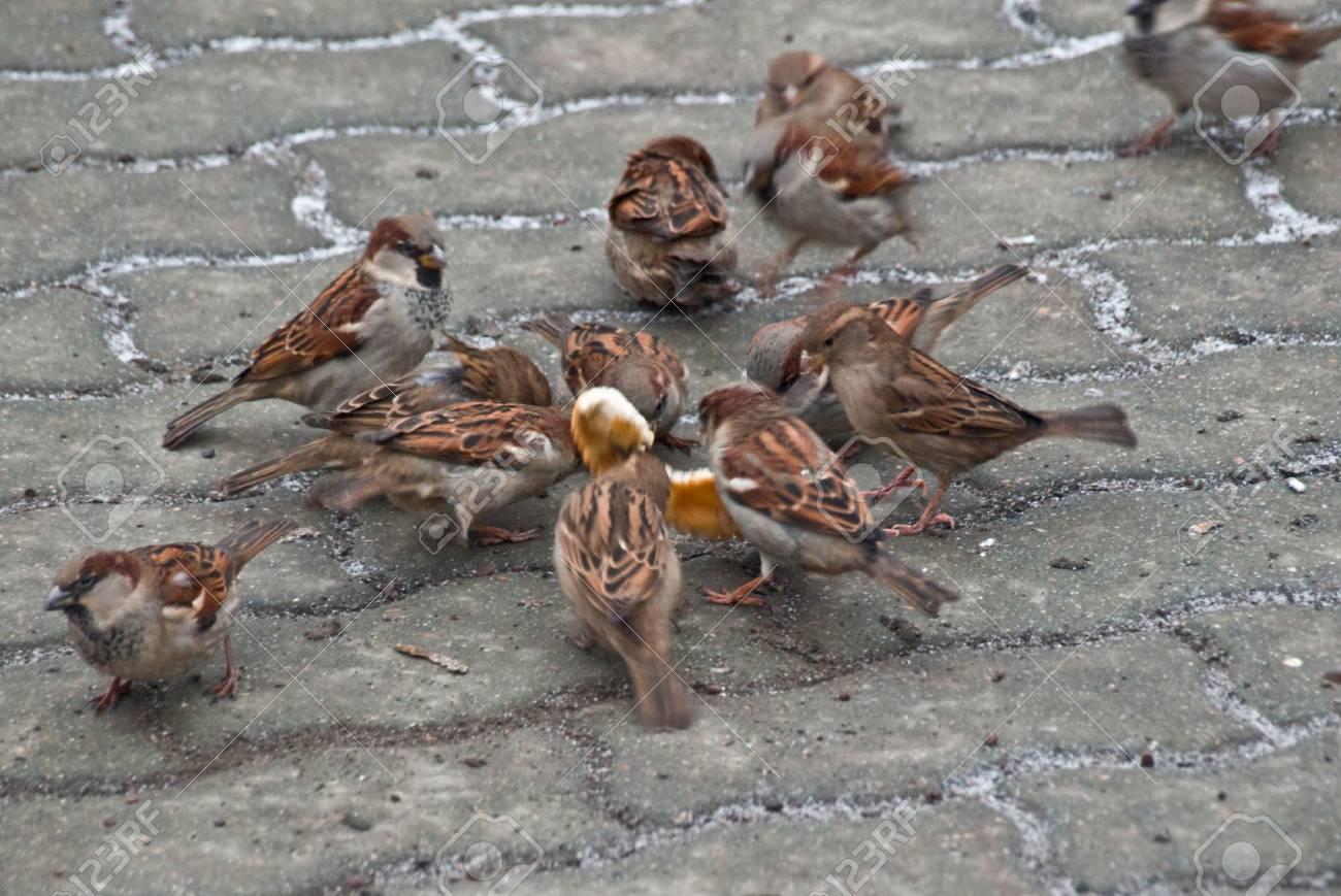 Sparrows, bread - 2593103