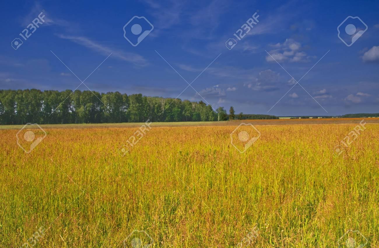 Sector agrícola  Foto de archivo - 3234056