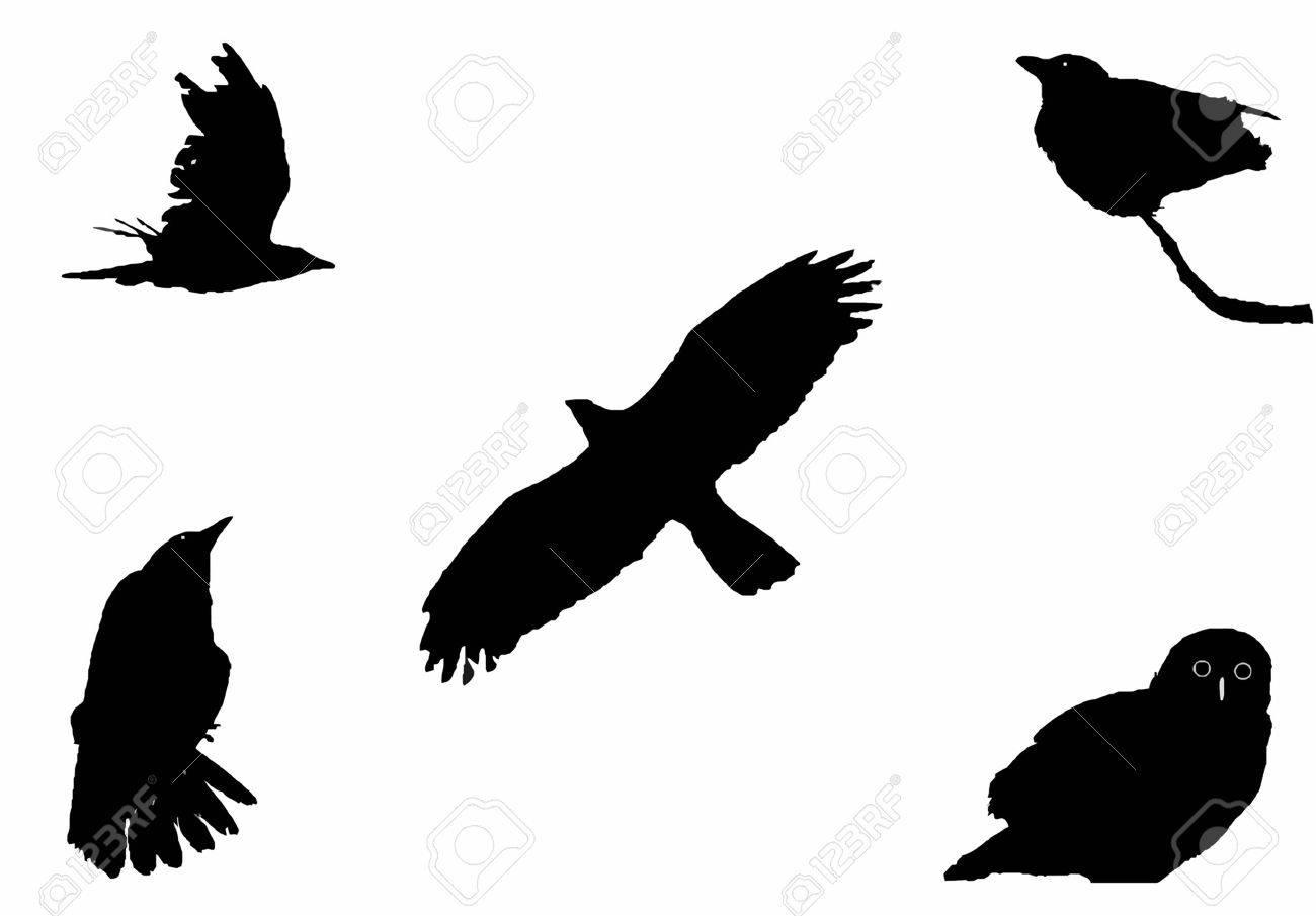 the big birds, silhouette set Stock Vector - 4763645