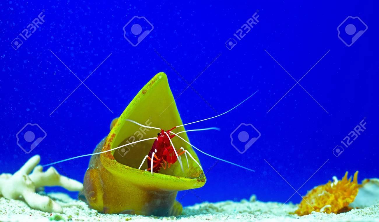 sea coral bottom Stock Photo - 16984412