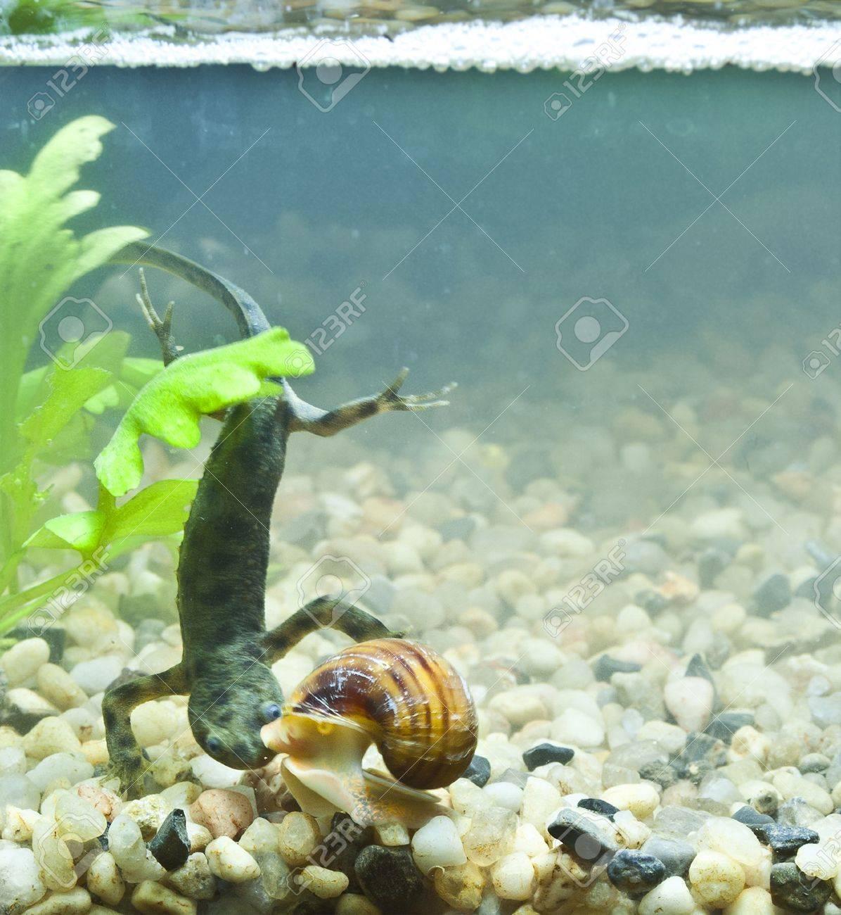 triton and snail Stock Photo - 19113967