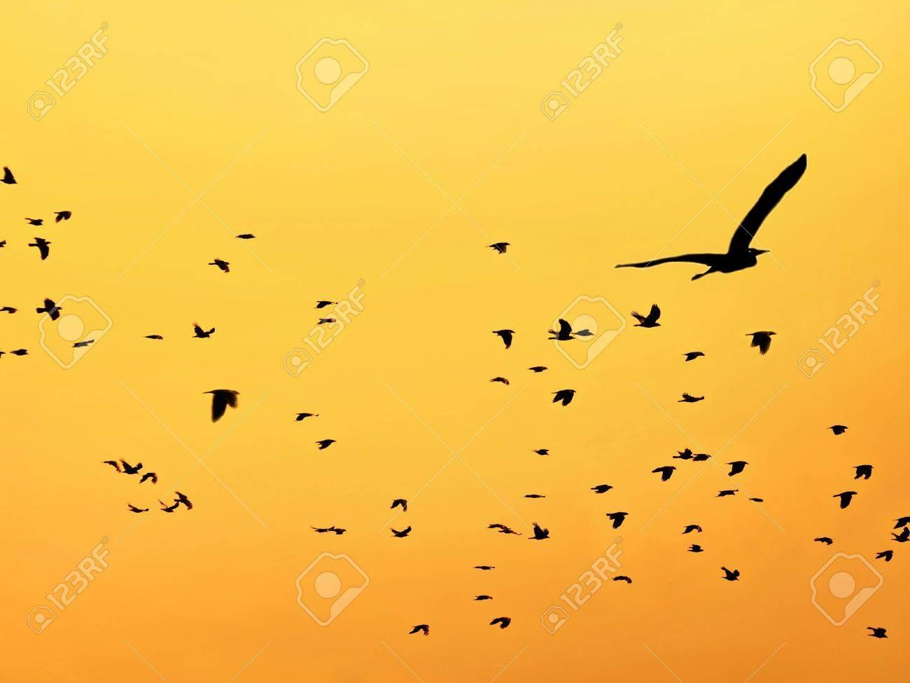 birds at sunset Stock Photo - 20047816