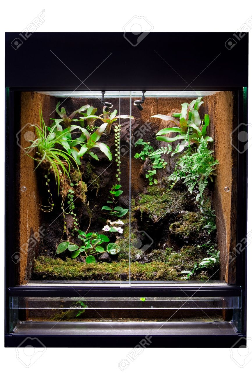 Rain Forest Terrarium To Keep Tropical Jungle Animals Such As